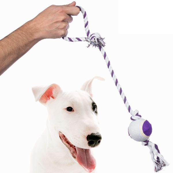 Pet Prior Bold i et Reb til Hunde